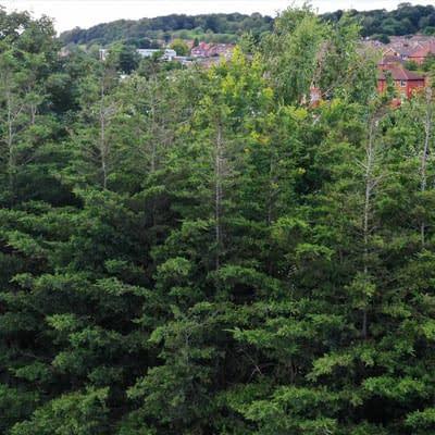 Environmental-RESPONSIBILITIES2 3